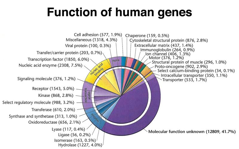 growing old - Human Genes